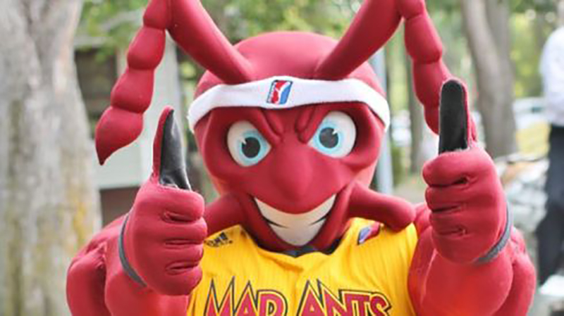 Mad Ants - Fort Wayne