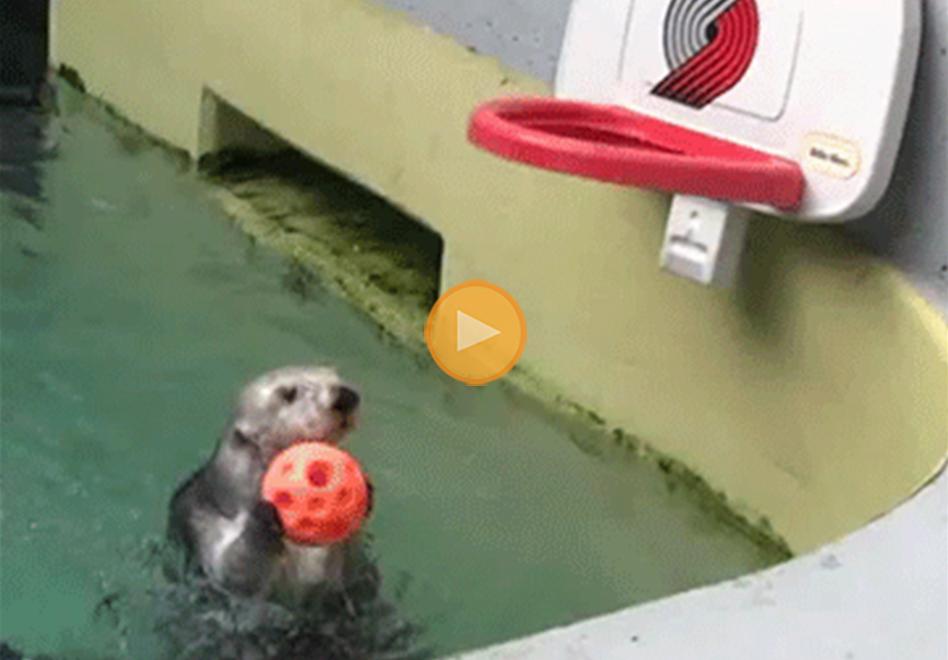 los mejores gifs de animales jugando basketball