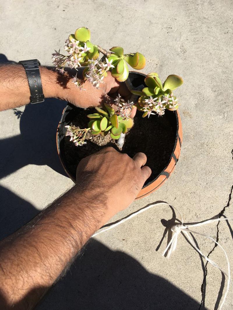 Maceta echa de balón: ¡A plantar! foto 3