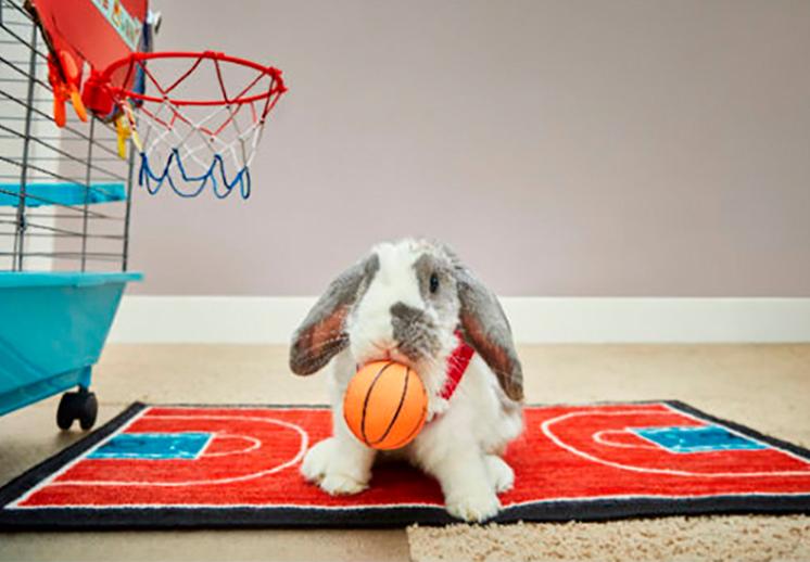 Conozcan a Bini The Bunny