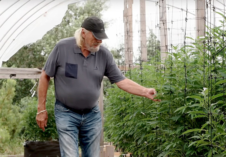 Don Nelson, del basquet a la marihuana